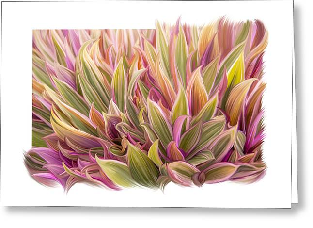 Cordylines Greeting Cards - Colorful Leaves Greeting Card by Ramona Murdock