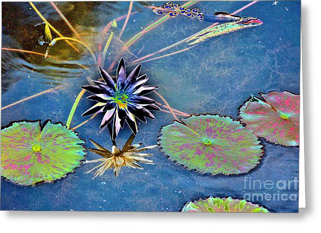 Water Garden Tapestries - Textiles Greeting Cards - Colorful Lilies Greeting Card by Edna Weber