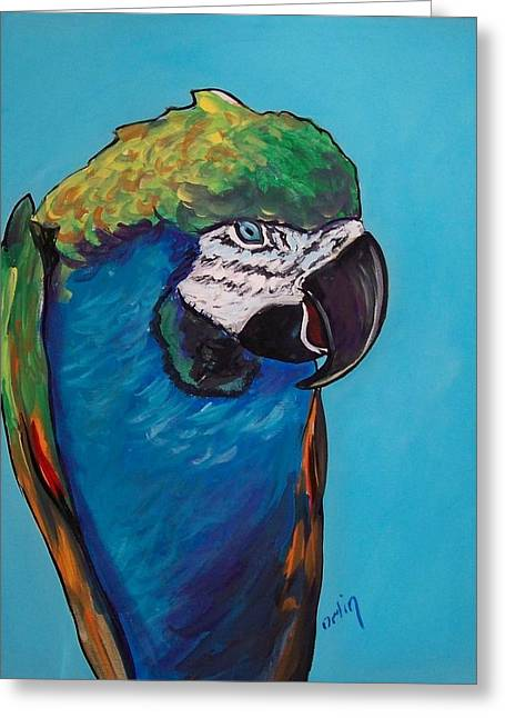 Mccaw Greeting Cards - Colorful McCaw Parrot Greeting Card by Bob  Orlin