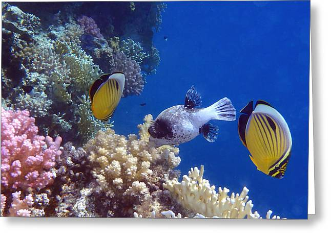 Decorative Fish Greeting Cards - Colorful Red Sea fish and corals Greeting Card by Johanna Hurmerinta