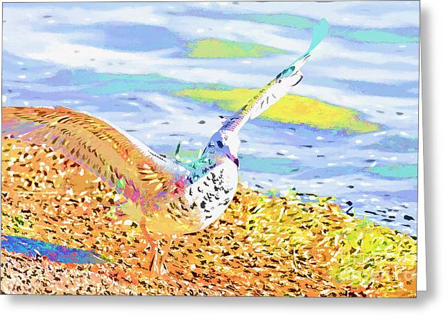 Beach Photography Mixed Media Greeting Cards - Colorful Seagull Greeting Card by Deborah Benoit