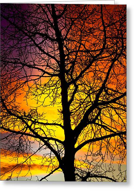Sunset Prints Greeting Cards - Colorful Silhouette Greeting Card by James BO  Insogna