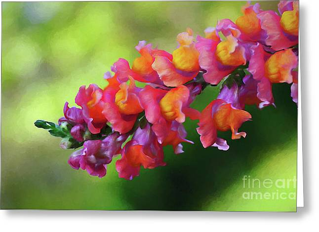 Snapdragons Greeting Cards - Colorful Snapdragon Greeting Card by Kaye Menner