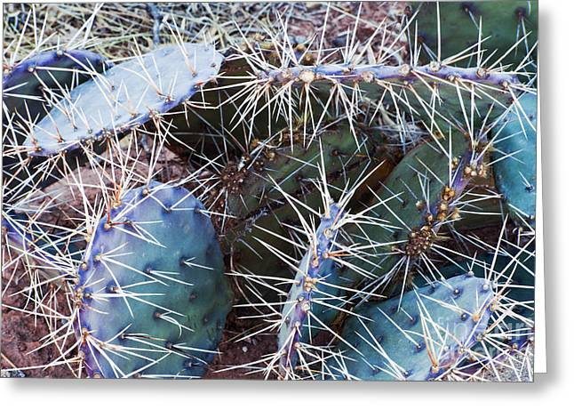 Thorny Desert Plant Greeting Cards - Colorful Thorny Cactus Greeting Card by Bill Brennan - Printscapes