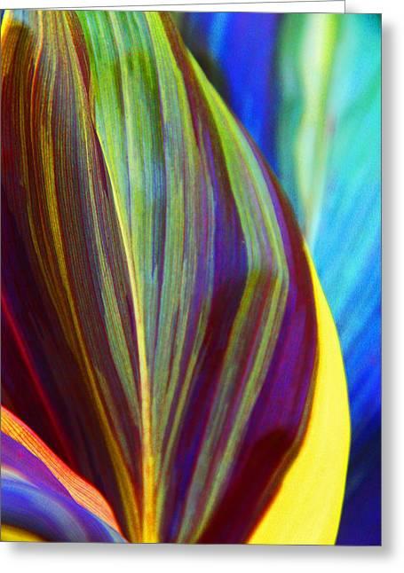 Kerri Ligatich Greeting Cards - Colorful Ti Leaves Greeting Card by Kerri Ligatich