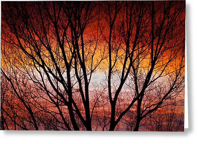 Sunset Prints Greeting Cards - Colorful Tree Branches Greeting Card by James BO  Insogna