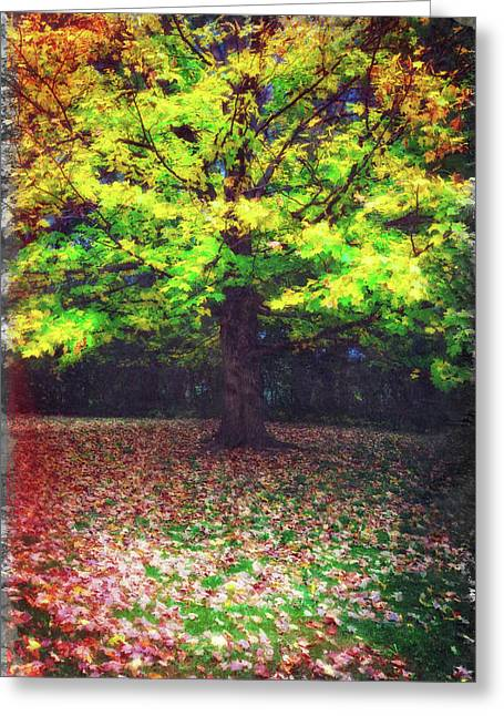 Colorful Tree Stands Alone In Autumn Greeting Card by Jennifer Rondinelli Reilly - Fine Art Photography