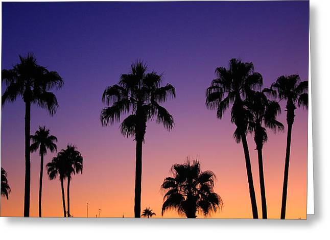 Palm Tree Greeting Cards Greeting Cards - Colorful Tropical Palm Tree Sunset Greeting Card by James BO  Insogna