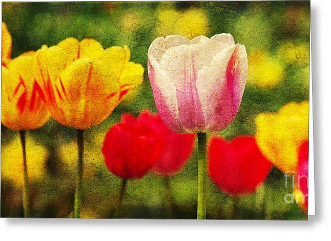 Tenderly Greeting Cards - Colorful tulips Greeting Card by Angela Doelling AD DESIGN Photo and PhotoArt