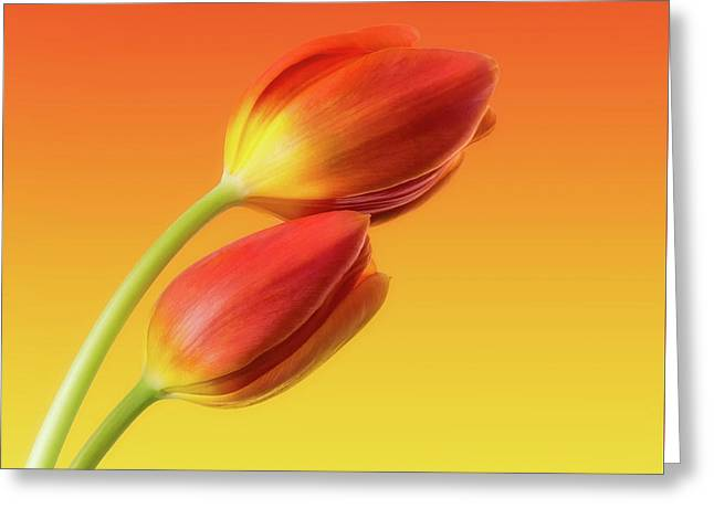 Flower Art Greeting Cards - Colorful Tulips Greeting Card by Wim Lanclus