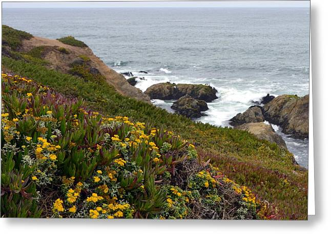 Colorful Wildflowers On Bodega Head Greeting Card by Carla Parris