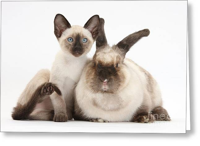House Pets Greeting Cards - Colorpoint Rabbit And Siamese Kitten Greeting Card by Mark Taylor