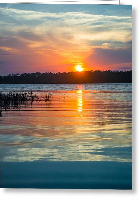 Gainesville Greeting Cards - Colors and Reflections Greeting Card by Parker Cunningham