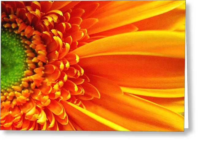 Rhonda Barrett Greeting Cards - Colors Galore Greeting Card by Rhonda Barrett
