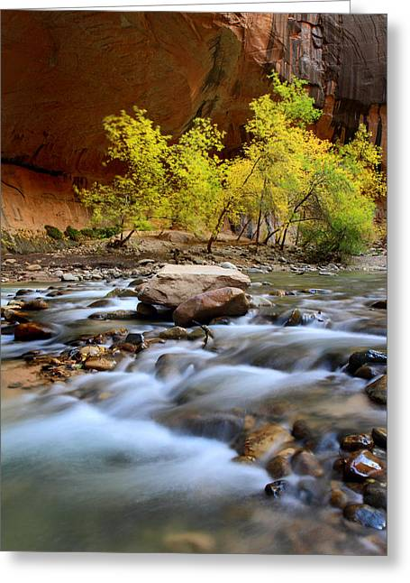 Narrow Canyons Greeting Cards - Colors in the Narrows of Zion Greeting Card by Pierre Leclerc Photography