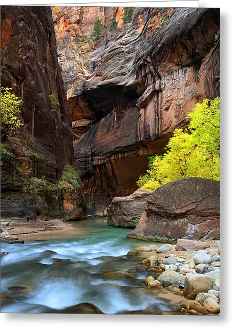 Narrow Canyons Greeting Cards - Colors in the Virgin Narrows of Zion Greeting Card by Pierre Leclerc Photography