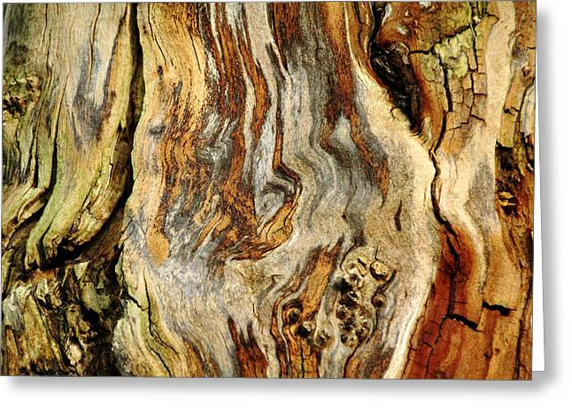 Gnarly Greeting Cards - Colors Of Bark Greeting Card by Debbie Oppermann