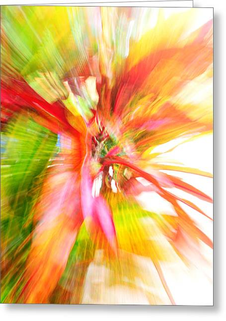 Recently Sold -  - Shower Curtain Greeting Cards - Colors of Croton  Greeting Card by Jim  Welch