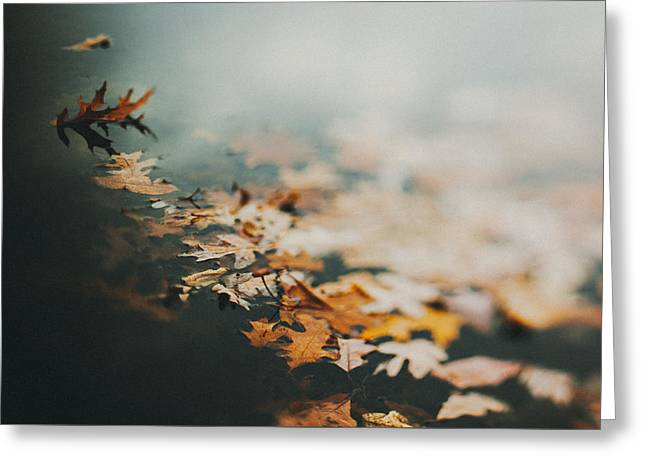 Leaves Photographs Greeting Cards - Colors of Fall Greeting Card by Tracy  Jade