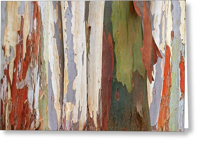 Colors Of Nature - Eucalyptus Tree Bark Abstract Greeting Card by Gill Billington
