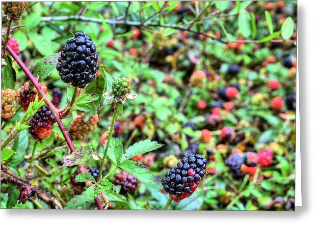 Black Berries Photographs Greeting Cards - Colors of Spring Greeting Card by JC Findley