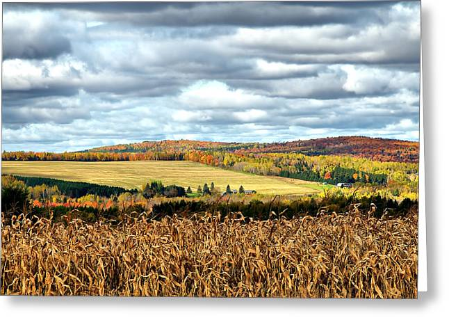 Recently Sold -  - Maine Farms Greeting Cards - Colors of the Field Greeting Card by Gary Smith
