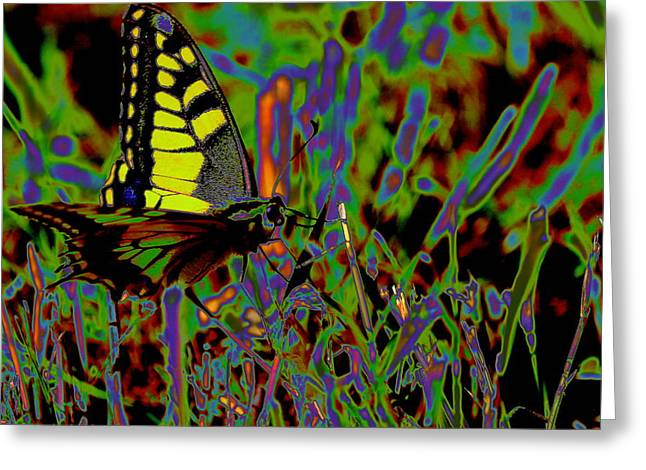 Coloured Butterfly Greeting Card by Samantha Mattiello
