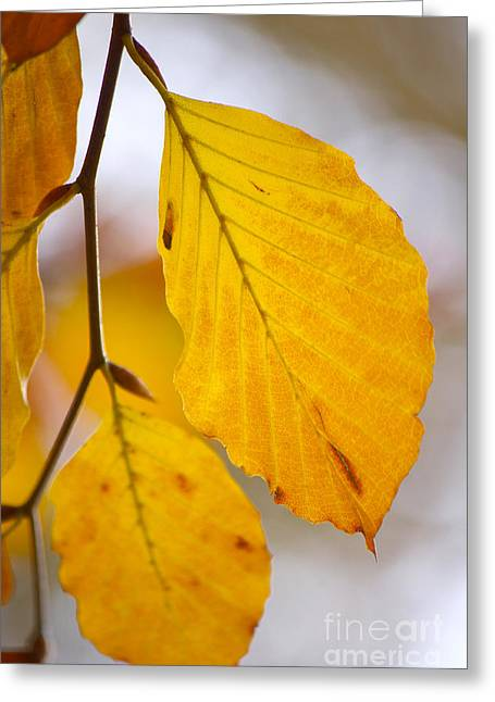 Angela Doelling Ad Design Photo And Photoart Greeting Cards - Colours of Autumn Greeting Card by Angela Doelling AD DESIGN Photo and PhotoArt