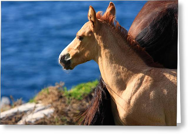 Horse Images Greeting Cards - Colt By The Sea Greeting Card by Aidan Moran