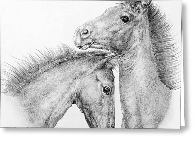 The Horse Greeting Cards - Coltish Characters Greeting Card by Roy Kaelin