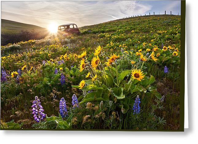 Columbia Hills Wildflowers Greeting Card by Thorsten Scheuermann