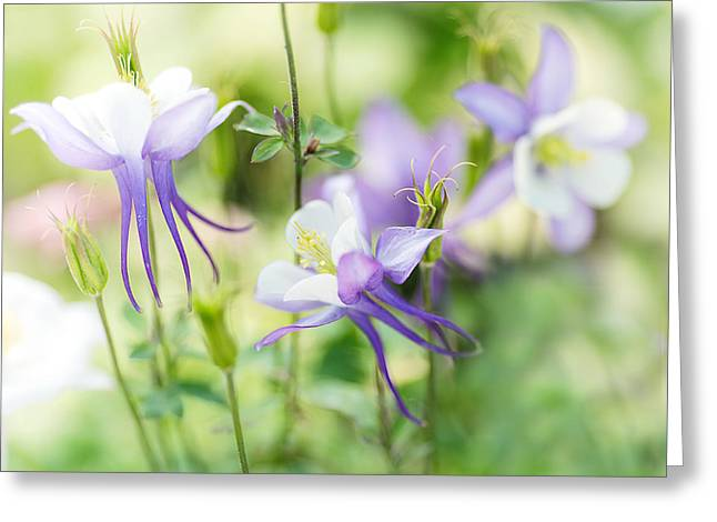Columbine Greeting Cards - Columbine Fairyland Greeting Card by Rebecca Cozart