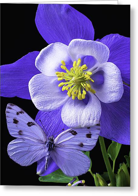 Columbine Greeting Cards - Columbine With Butterfly Greeting Card by Garry Gay