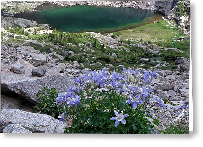 Chasm Lake Greeting Cards - Columbines  Greeting Card by George Tuffy