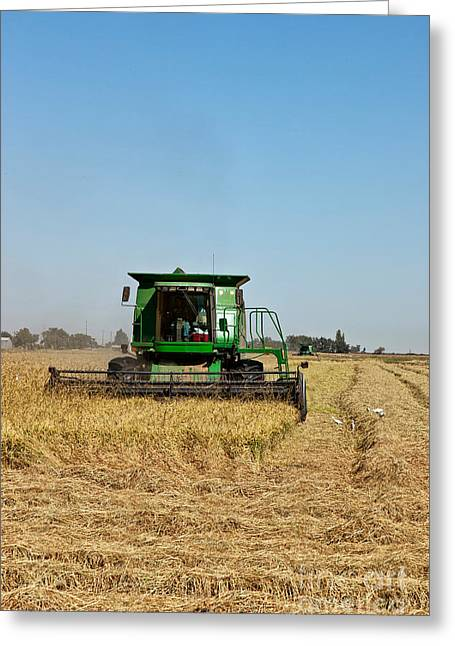 California Agriculture Greeting Cards - Combine Harvesting Rice, California Greeting Card by Inga Spence