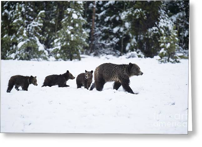 Yearling Greeting Cards - Come Along - Grizzly Family Greeting Card by Sandra Bronstein