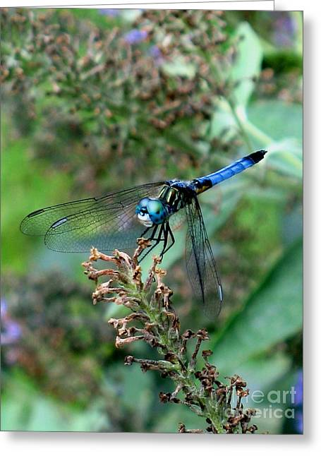 Dragonflies Photographs Greeting Cards - Come Fly With Me Greeting Card by Julian Bralley