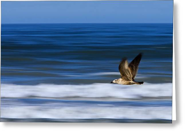 Flying Bird Greeting Cards - Come Home Nelson Greeting Card by Basie Van Zyl