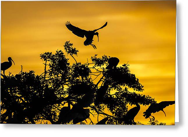 Silhouettes Greeting Cards - Coming Home Greeting Card by Mike Lang