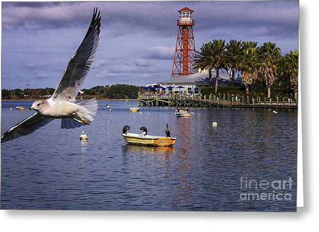 Boats In Water Greeting Cards - Coming In For A Landing  Greeting Card by Mary Lou Chmura