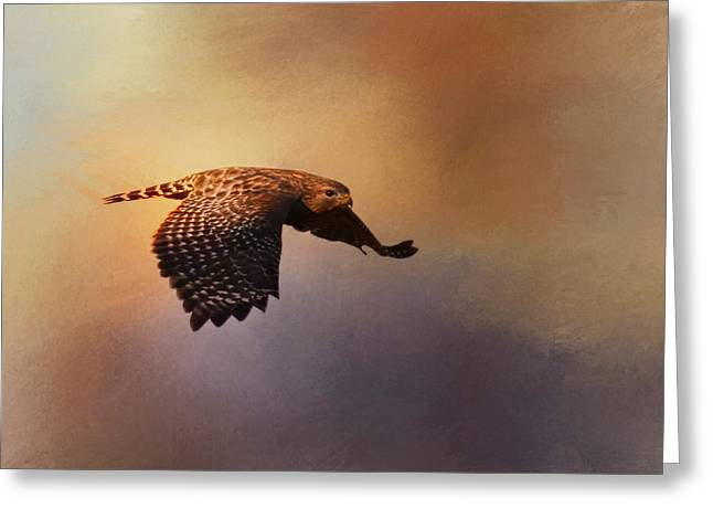 Red Shouldered Hawk Greeting Cards - Coming In For The Evening Greeting Card by Jai Johnson