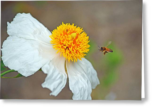 Flower Blossom Greeting Cards - Coming in Hot Greeting Card by Robert Wallace