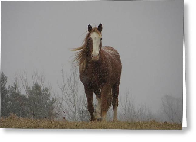 Grazing Snow Greeting Cards - Coming To You Greeting Card by Frideswide Photographycom
