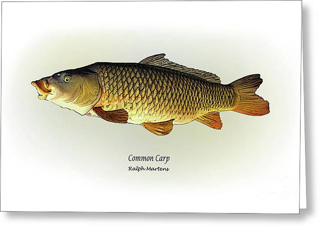 Common Carp Greeting Card by Ralph Martens