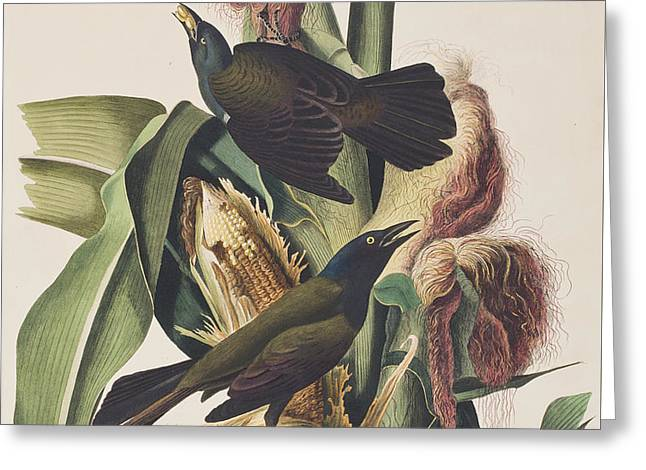 American Crow Greeting Cards - Common Crow Greeting Card by John James Audubon