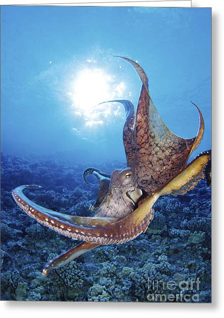 Jet-propelled Greeting Cards - Common Cuttlefish Greeting Card by Dave Fleetham - Printscapes