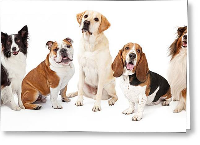 Border Photographs Greeting Cards - Common Family Dog Breeds Group Greeting Card by Susan  Schmitz