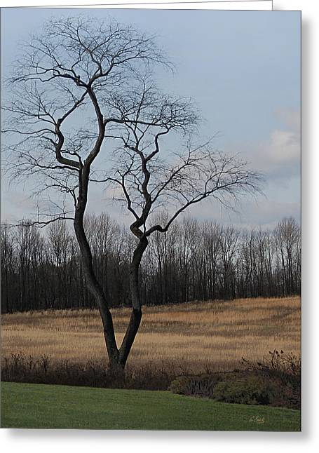 Pennsbury Greeting Cards - Common Grace Greeting Card by Gordon Beck