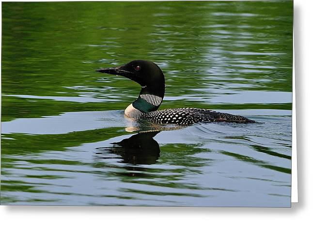 Canadian Wilderness Greeting Cards - Common Loon Greeting Card by Tony Beck