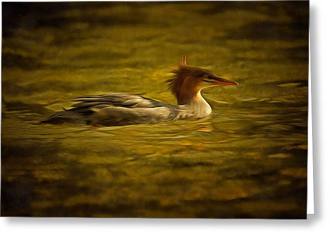 Water Fowl Greeting Cards - Common Merganser 2 Greeting Card by Mark Kiver